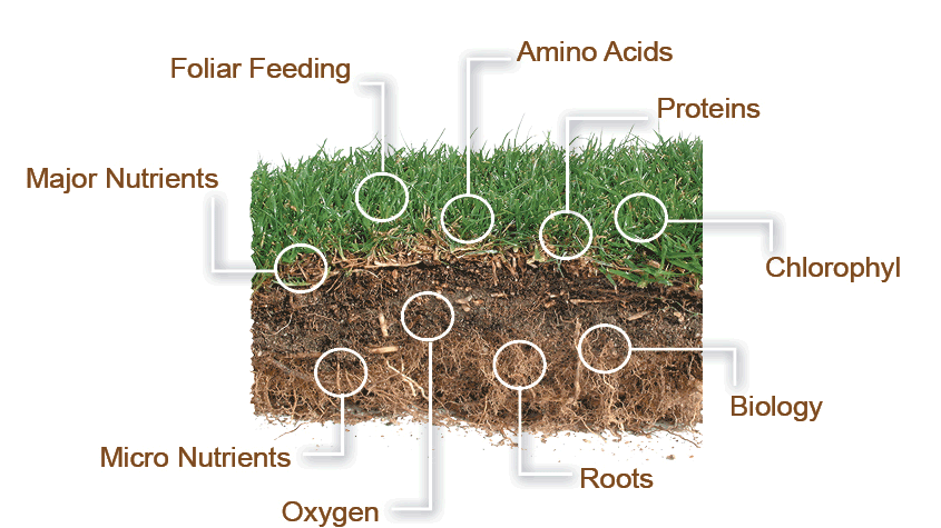 Fertilization Biofeed